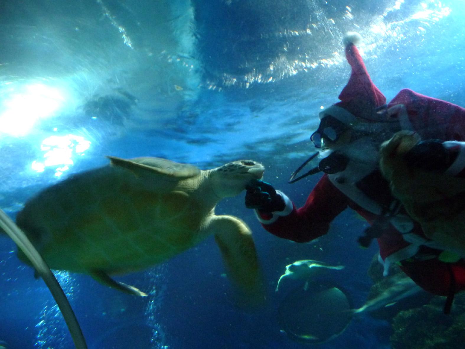 Diese datei herunterladen sealife weihnachten 2