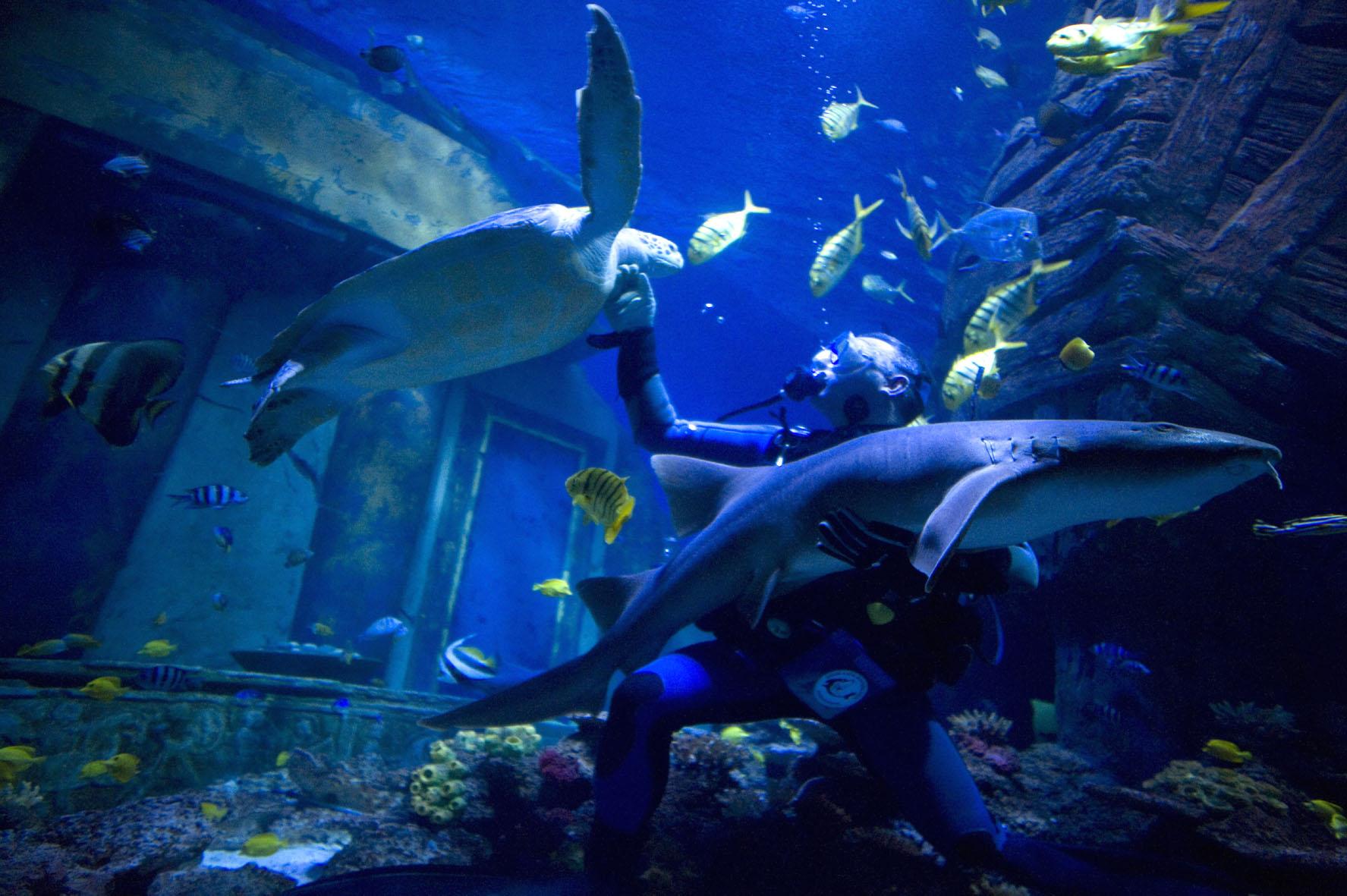 ... zwischen tauchleher und ammenhaiweibchen im sea life m?nchen sea