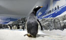 pinguine007_thumb