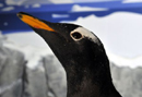 pinguine022_thumb