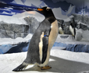 pinguine023_thumb